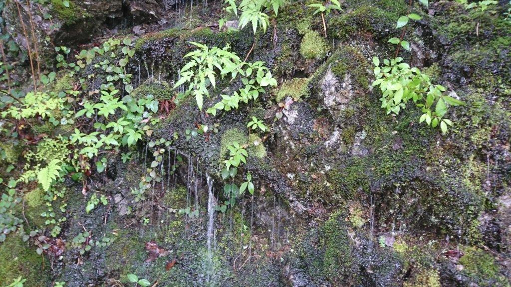 苔に滴る水