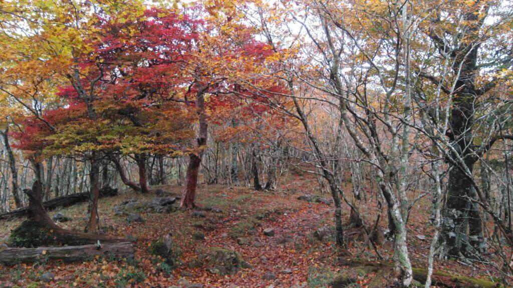 大峯奥駈道の紅葉
