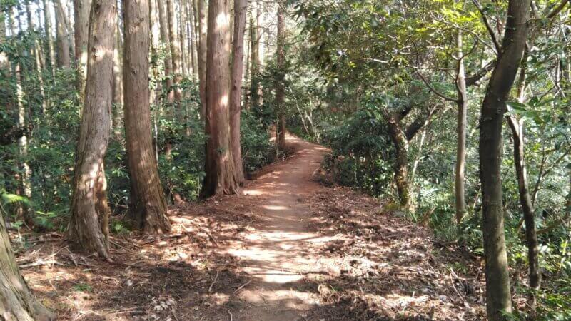 木漏れ日のトレイル